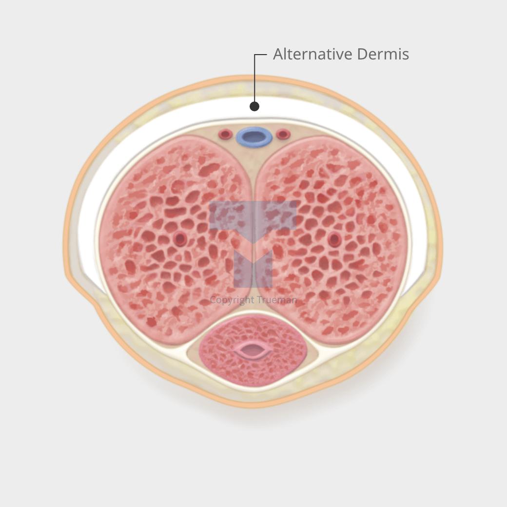 PENIS ENLARGEMENT :: DNA Penis Enlargement
